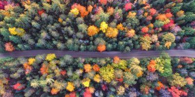 KiteEdge_Forest-1.jpg
